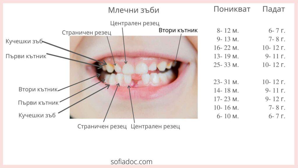 зъби схема